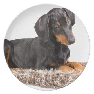 cute doberman pinscher puppy melamine plate