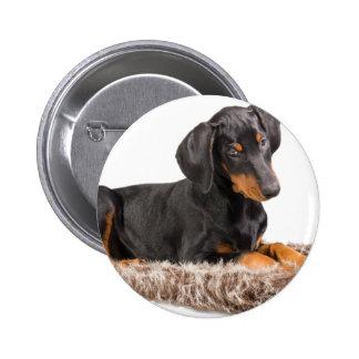 cute doberman pinscher puppy pinback button