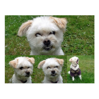 Cute Dog 3 Picture Postcard