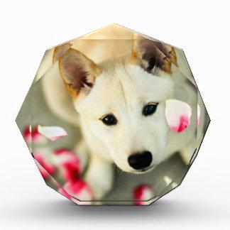 Cute dog acrylic award