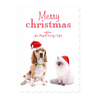 Cute Dog And Kitten With Christmas Hats Card
