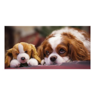 Cute dog and toy photo card