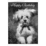 Cute Dog Birthday Card