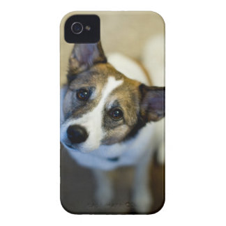 Cute Dog Blackberry Bold Case