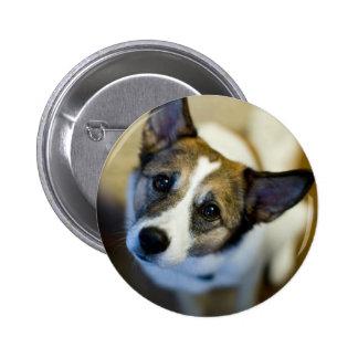 Cute Dog Button