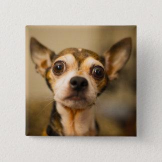 Cute Dog button 10