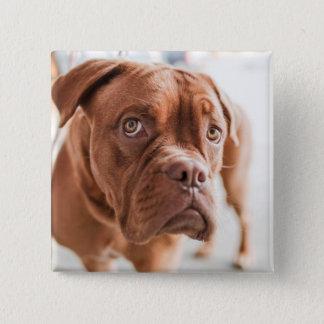 Cute Dog button 11