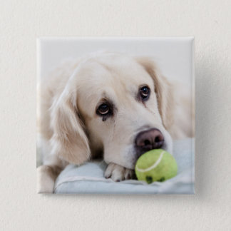 Cute Dog button 4