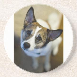 Cute Dog Coaster