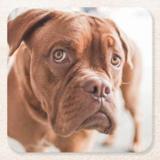 Cute Dog coasters 6