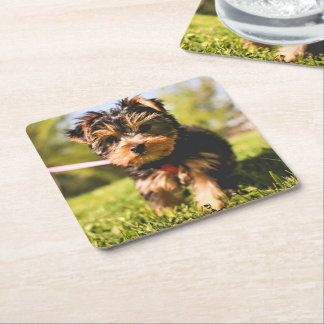 Cute Dog coasters 9