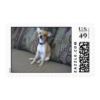 Cute Dog Custom Postage Stamps