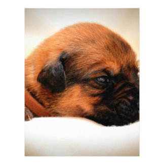 Cute Dog Flyer