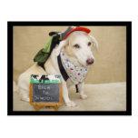 Cute Dog Funny Back to School Postcard