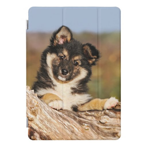 Cute Dog Icelandic Sheepdog Puppy at a Tree Trunk iPad Pro Cover