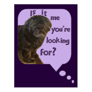 Cute Dog looking for You Postcard
