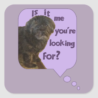 Cute Dog looking for You Square Sticker