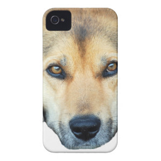 Cute dog on any color background Case-Mate iPhone 4 case