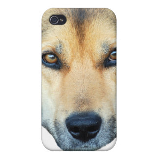 Cute dog on any color background cases for iPhone 4