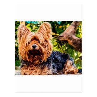 Cute Dog Pet Yorkie Peace Love Destiny Fun Art Postcard