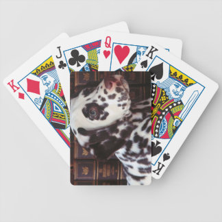 cute dog playing cards