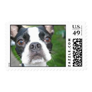 Cute dog Postage