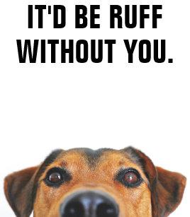 Dog Thank You Cards | Zazzle
