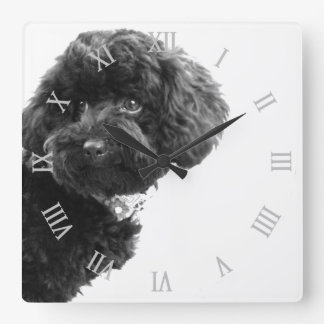 Cute Dog Puppy Black and White/Photography Square Wall Clocks