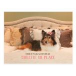 Cute Dog Shelter in Place | Sheltie Postcard