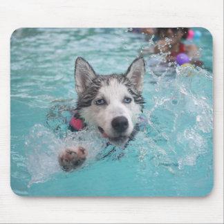 Cute dog swimming in pool mousepad
