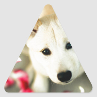 Cute dog triangle sticker