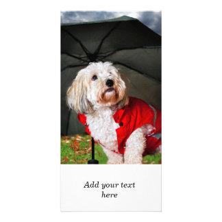 Cute dog under umbrella photo greeting card