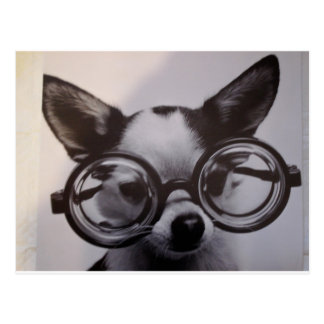 Cute dog with oversized glasses postcard