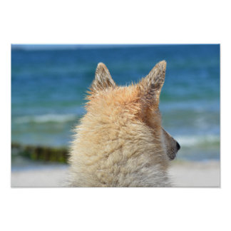 Cute Dog WIth Salty Fur Looking At The Beach Poster