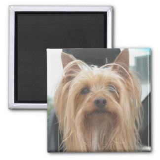 Cute Doggie Magnet