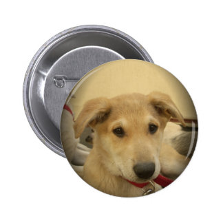 Cute Dogs and Puppies Mans second Best Friend.png Pinback Button
