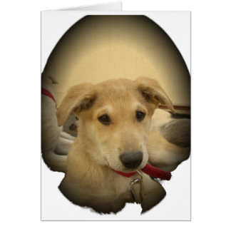 Cute Dogs and Puppies Mans second Best Friend.png Card