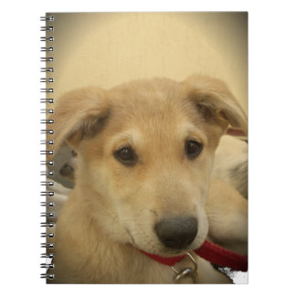 Cute Dogs and Puppies Mans second Best Friend.png Notebook
