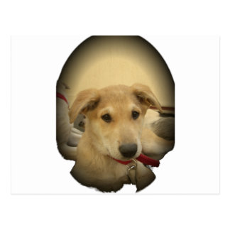 Cute Dogs and Puppies Mans second Best Friend.png Postcard