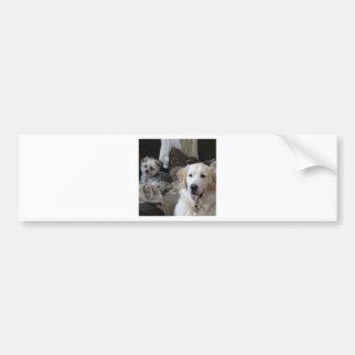 Cute Dogs Car Bumper Sticker
