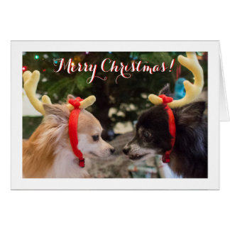 Cute Dogs Dressed as Christmas Reindeer Card
