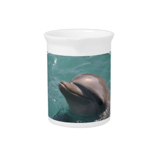 Cute Dolphin Pitcher