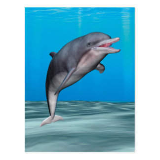 Cute Dolphin Postcard