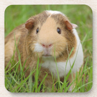 Cute Domestic Guinea Pig Beverage Coaster