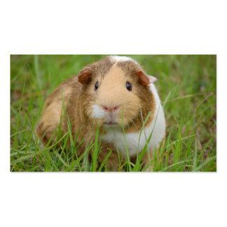 Cute Domestic Guinea Pig Business Card