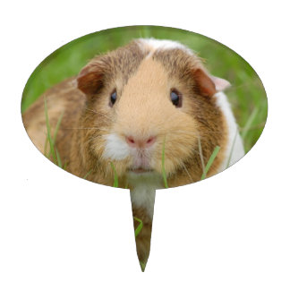 Cute Domestic Guinea Pig Cake Topper