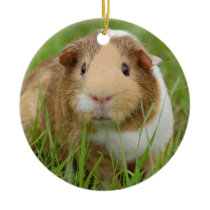 Cute Domestic Guinea Pig Ceramic Ornament