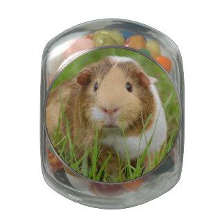 Cute Domestic Guinea Pig Glass Jars