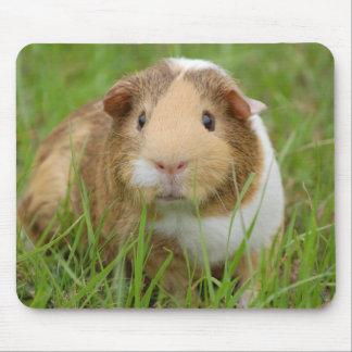 Cute Domestic Guinea Pig Mouse Pad