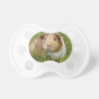 Cute Domestic Guinea Pig Pacifier
